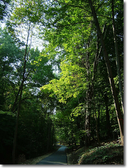 The ravine is one of the larger areas of tree cover in the City.